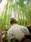 「竹林の貴婦人」40回京都新聞写真コンテスト佳作