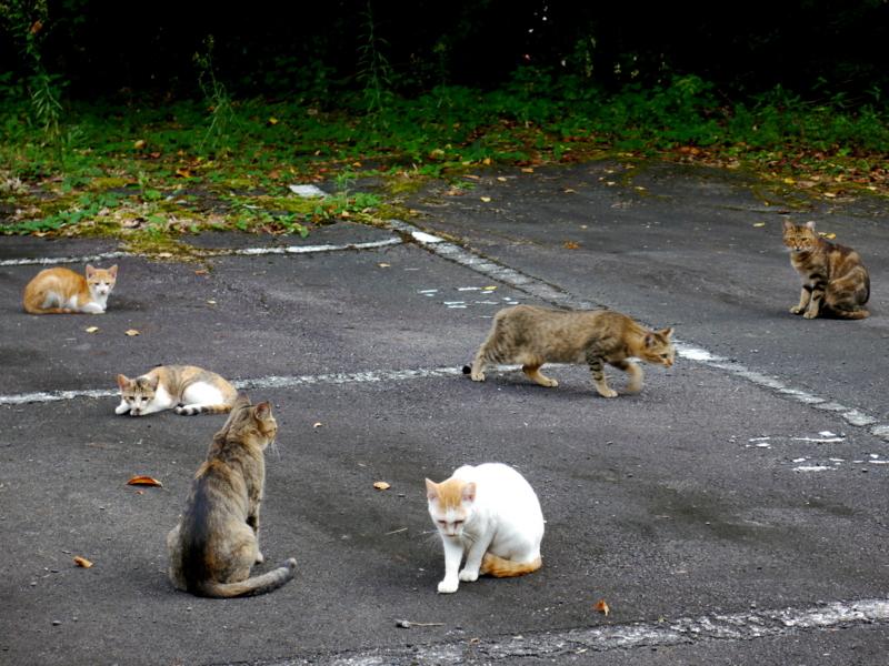 猫の集会@大原