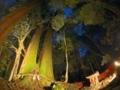 「相生の杉」3回京都洛北・森と水のフォトコンテスト優秀賞