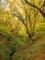 朽木生杉ブナ林