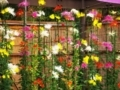 府立植物園
