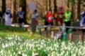 京都マラソン@植物園