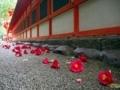 落ち椿@下鴨神社