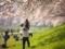 「初めての花見」34回京都まちとみどり写真コンクール佳作