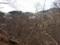 タムシバ咲く八丁平
