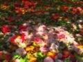 椿苑の木漏れ日@京都府立植物園