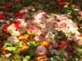 木漏れ日射す椿苑@京都府立植物園