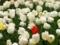 紅一点@京都府立植物園