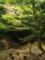 大津ふれあいの森
