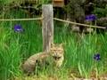 梅宮大社の猫