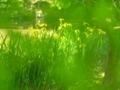 新緑フィルター@京都府立植物園