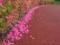 花のライン@京都府立植物園にて