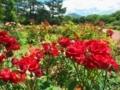 バラ@京都府立植物園