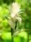 花の下の秘め事@京都府立植物園