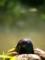 紫帽子@京都府立植物園