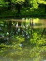 新緑を写す@京都府立植物園