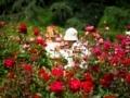 薔薇に囲まれて@京都府立植物園