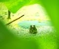見つめる彼方@京都府立植物園