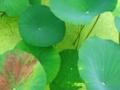 京都府立植物園にて