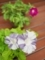 日本の色@京都府立植物園