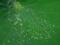 蓮葉の色彩@京都府立植物園