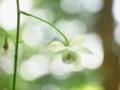 花弁で休息@京都府立植物園