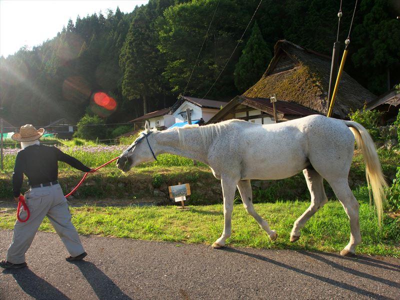 白馬と北山友禅菊@京都久多