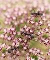 蟻と花@京都府立植物園