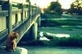 見つめる@出雲路橋