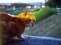 黄昏猫@出雲路橋