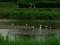 雨の賀茂川