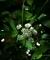 ひっそりと咲く@京都府立植物園@京都府立植物園