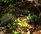 虹色の散水@京都府立植物園