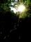 蜘蛛の巣マジック1、虹色の梯子@大文字山