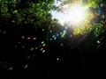 蜘蛛の巣マジック2、色降る@大文字山