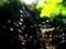 蜘蛛の巣マジック3@大文字山