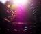 蜘蛛の巣マジック4、光の魔術師@大文字山