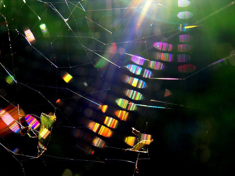 蜘蛛の巣マジック5、蜘蛛糸プリズム@大文字山