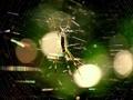 蜘蛛の巣マジック8@大文字山