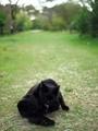 黒猫@京都府立植物園