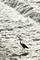 賀茂川のサギ