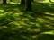 木漏れ日の苔庭@京都府立植物園