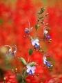 秋の植物園