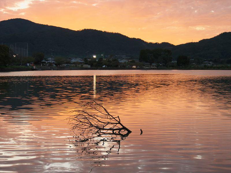 広沢池夕景3