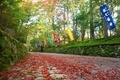 秋の参道@赤山禅院