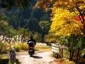 秋の山に向かう@京都大見