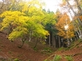 山の秋@京都八丁平