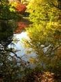 秋の半木(なからぎ)の池@京都府立植物園