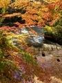 曼殊院弁天池の紅葉