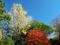 青黄緑赤京都御苑